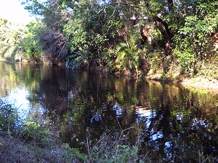 A Davie Florida canal and waterway