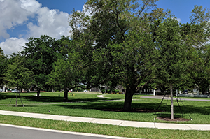 One of the conservation easement areas managed by the Davie Area Land Trust at Oak Park, Davie, Florida