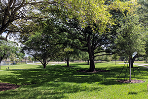 Conservation area at Oak Park, Davie, Florida, protected by the Davie Area Land Trust