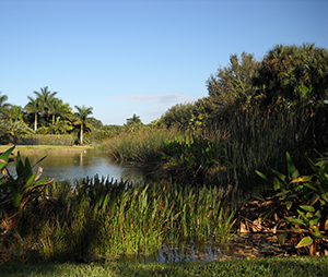 Davie Florida wetland preservation mitigation