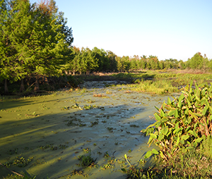 Davie Florida wetland preservation