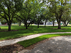 Another view of the west end conservation easement at Davie Florida Oak Park.